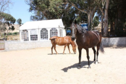 training with horses