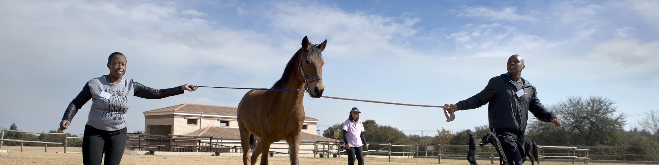 Self development with horses