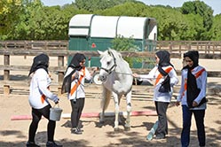 training horses Dubai