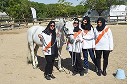 training horses UAE
