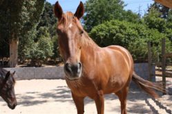 development with horses