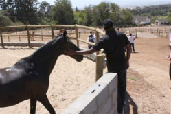 training and horses