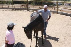 people development with horses